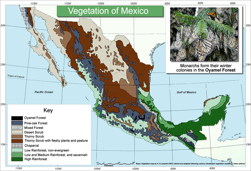 Vegetation map of mexico showing monarch butterfly oyamel forest habitat.