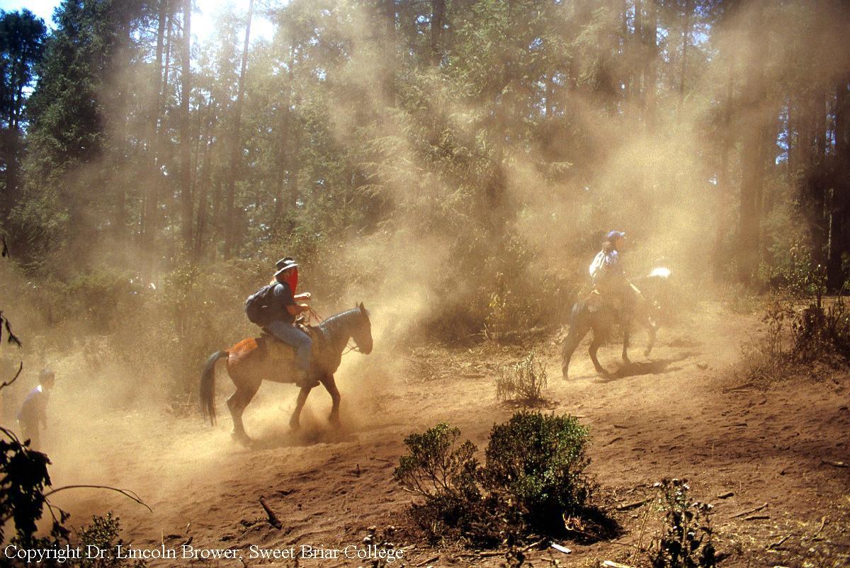 Dry season in monarch sanctuaries
