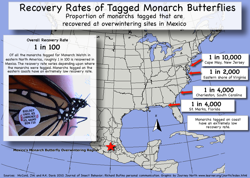 Recovery Rates of Tagged Monarch Butterflies
