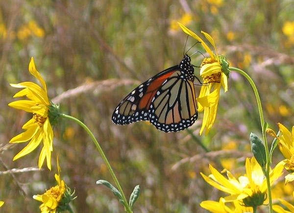 A Nectarivor Eats Nectar