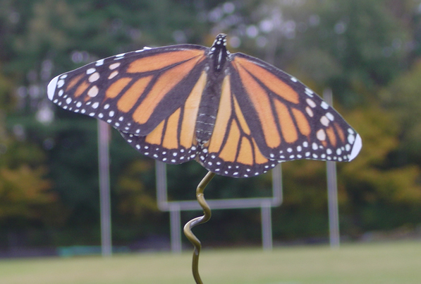 Experiment! When do monarchs disappear from view?