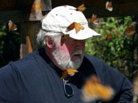 Monarch butterfly lipid mass: graph