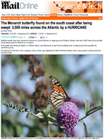 Monarch carried to England by Hurricane Issac
