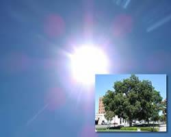 sun or shade