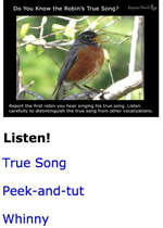Robins True Song and other Vocalizations