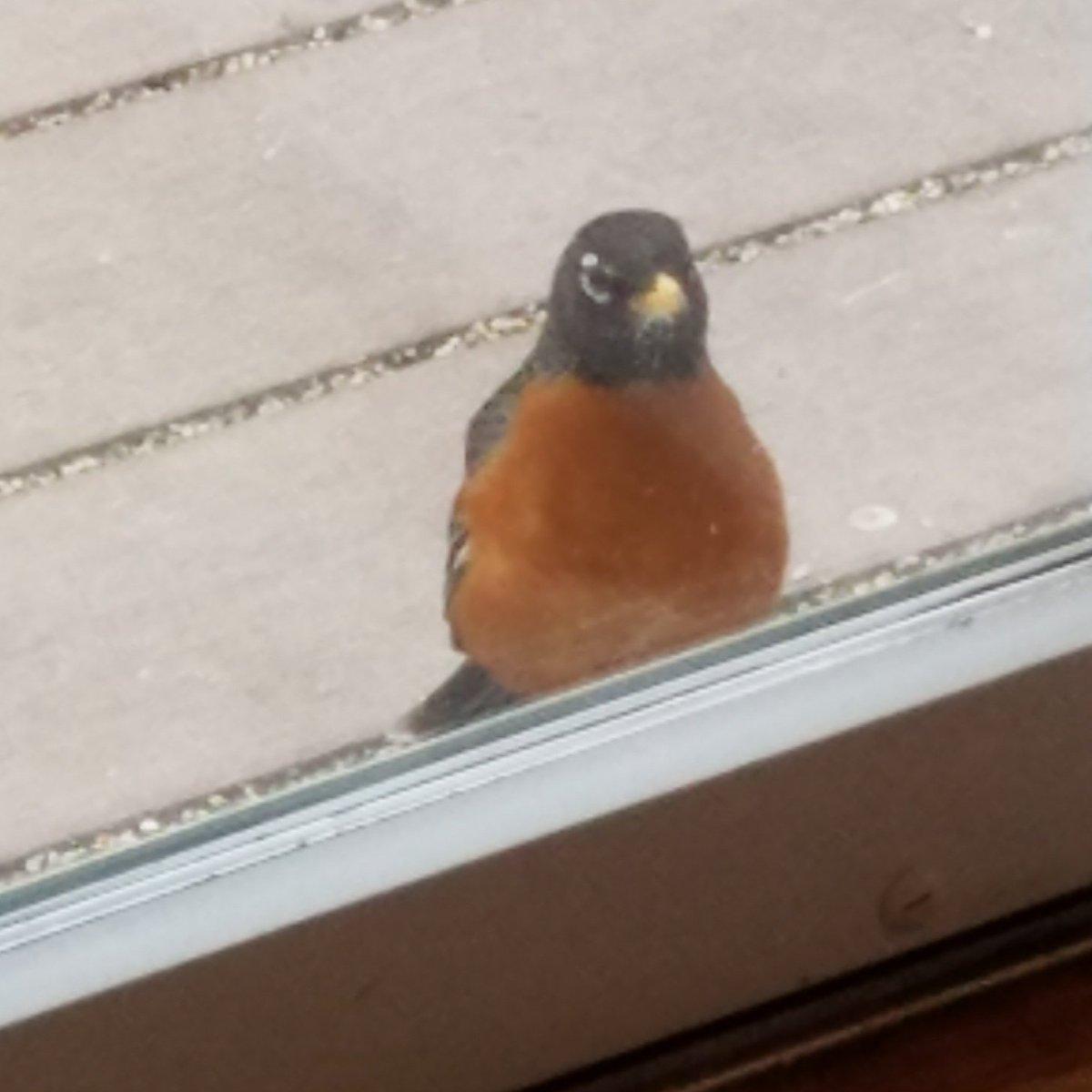 Robins Hitting Windows