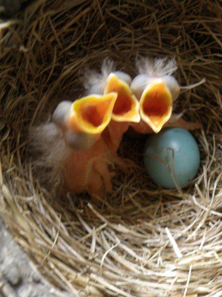 Disposable Diapers for Birds: The Scoop on Poop