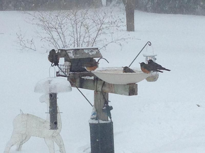 Robins at birdbath in snowy yard.