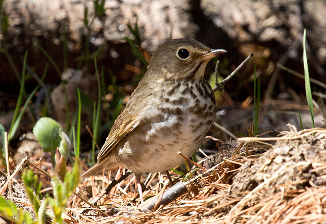 Weather and Songbird Migration Update | Journey North News