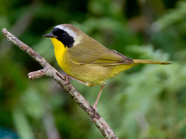Journey North | Weather and Songbird Migration