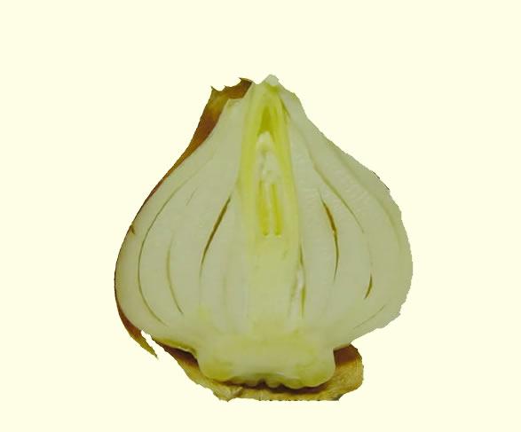 tulip bulb cut