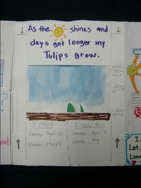 tulip_portfolio09