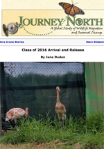 Whooping Crane migration fall 2016