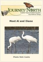 Meet Al and Diane: The Flock's Most Productive Cranes