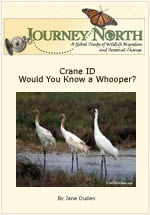 Crane Identification: Would You Know a Whooper?