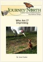 Read booklet or view slideshow about imprinting these baby Whooping cranes.