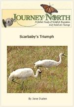 Scarbaby's Triumph