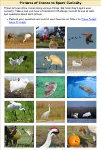 Photos of Whooping cranes to spark curiosity