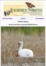 cover of slideshow: Nesting Season