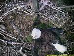 eaglecam042903_1000