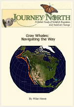 Gray whale slideshow: Navigating the Way
