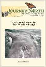 Visiting a Gray Whale Nursery