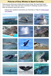 Gallery of Photos of Gray Whales to Spark Curiosity