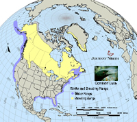 Common Loon Map: Breeding Range