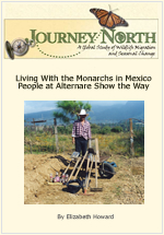 Living With the Monarchs in Mexico