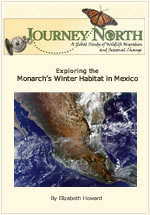 Where monarch butterflies spend winter in Mexico