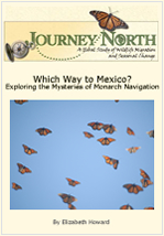 How do monarch butterflies navigate