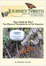 How cold Monarch Butterfly fly