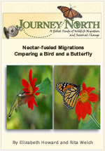 Monarch Butterfly and Hummingbird Migration