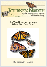 Can You Identify a Monarch Butterfly