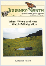 When, Where and How to Watch Fall Monarch Butterfly Migration