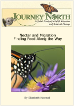 Nectar and Monarch Butterfly Migration