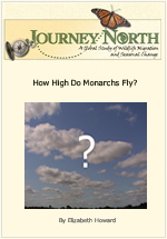 How High Do Monarch Butterflies Fly?