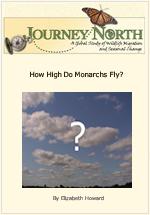 How High Do Monarchs Fly?