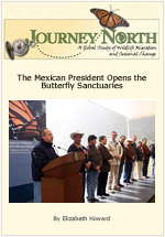 Monarch Butterfly Tourism in Mexico