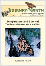 Temperature and Monarch Winter Survival in Mexico