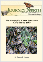 The Monarch's Winter Sanctuary | A Scientific Tour