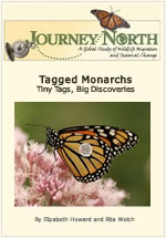 Tagging Monarchs: Tiny Tags, Big Discoveries