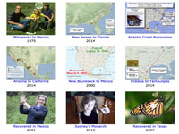 True stories about tagged monarch butterflies.