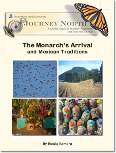The Monarch's Arrival and Mexican Traditions