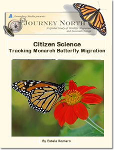 Citizen Science: Tracking Monarch Butterfly Migration