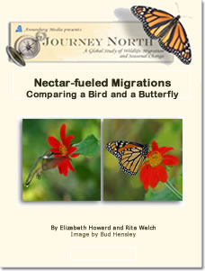 Comparing Migrations: A Bird and a Butterfly