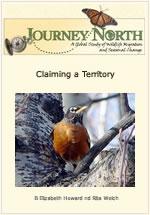 Robin Territory