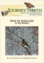 Wintertime Food