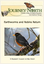 Earthworms and Robins