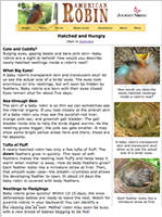 Baby Robins Hatched and Hungry: Article